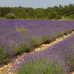 The Provence Region of France